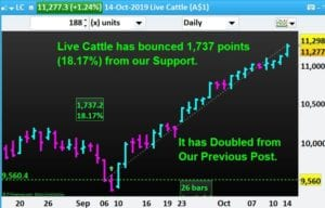 Commodity-Trading-Live Cattle-NP-Financials-Oct-2019-Best-Trading-Education