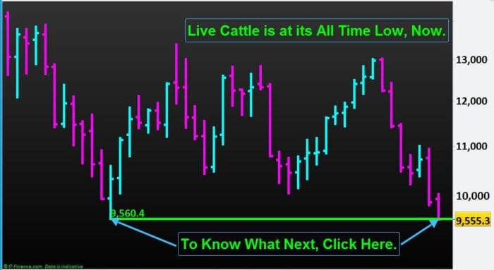 Commodity-Trading-Live Cattle-NP-Financials-Sep-2019-Best-Trading-Education