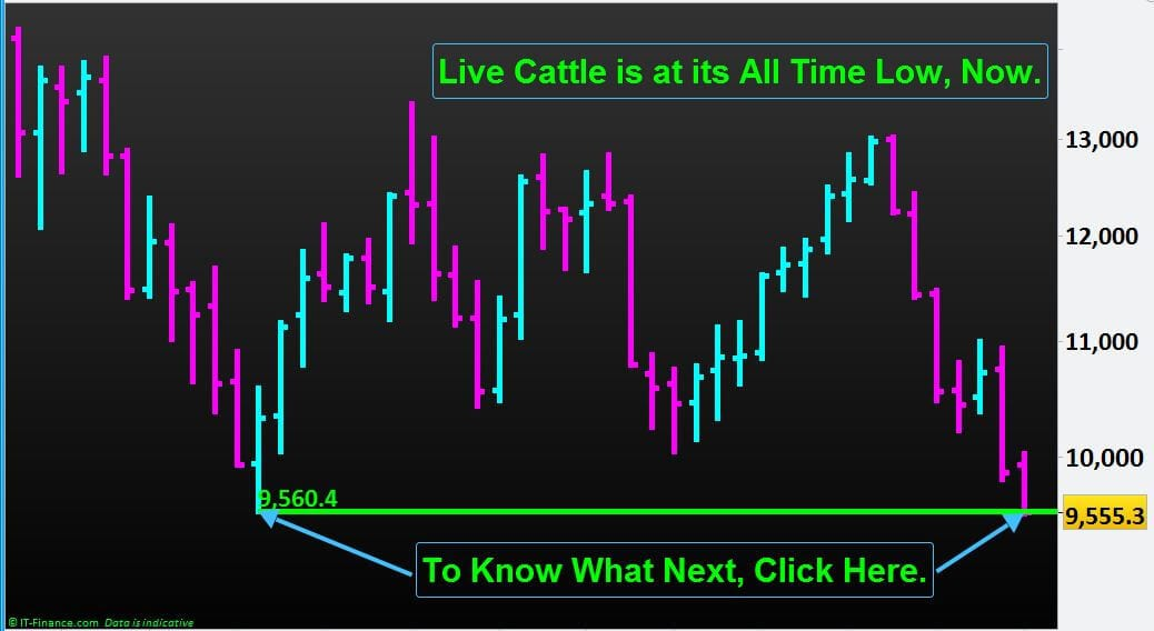 Live Cattle is at its All Time Low, Now. What Next?